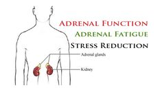 A highly functional adrenal gland is a key element in healing!  #health #wellness #rejuvenation livefreebeyou.com