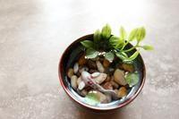 Miniature Koi Pond in Blue Vietnamese Bowl