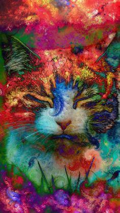 Voidpapers — Catnip