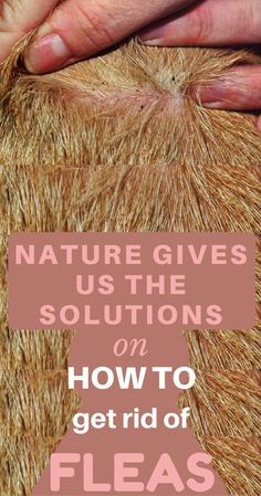 Nature Gives Us The Solutions On How To Get Rid Of Fleas