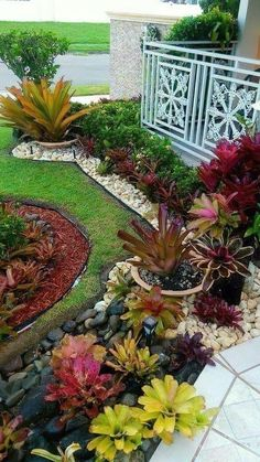 Small Front Yard Landscaping, Florida Landscaping, Front Yard Design, Tropical Landscaping, Landscaping With Rocks, Backyard Landscaping, Landscaping Ideas, Front Yard Ideas, Tropical Garden Design
