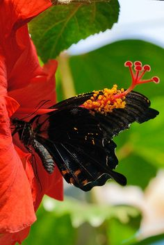 Franschhoek Butterfly World