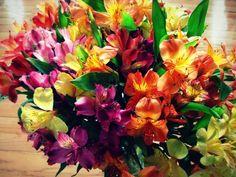 Peruvian Lilies - FlowerPictures.us
