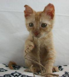 SAPA – San Antonio Pets Alive   Adopt a Cat
