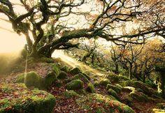 Solitario nel bosco...    (ZooFitoSfera животные и растения - G+)