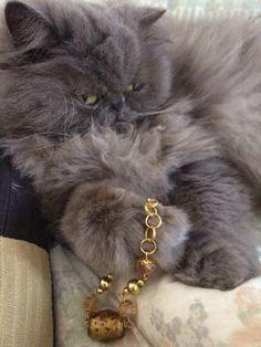 I #bijoux che piacciono a tutti.  #bracciale color #oro con #vetro e #cristalli #gialli. The #jewelry that everyone likes. #metallic #jewelry in #gold color with #yellow #glass and #crystals. La #joya que gusta a todo el mundo. #pulsera en metal color #oro con #vidrio y #cristales #amarillo. #oro18 #gatto #gato #cats