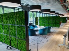 Make your office COVID secure with Green Screens and Plant Barriers. Indoor Office Plants, Screen Plants, Moss Wall Art, Outdoor Furniture, Outdoor Decor, Potted Plants, Space Saving, Tiny House, Screens
