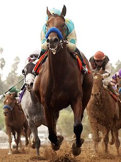 American Pharoah and coming in behind him is Frosted the gray horse, a long shot came in fourth!