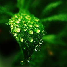 Amazing Water Macro Photography