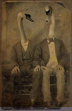 how bizarre and disturbing,,,the earliest photoshop? Swans, Vintage Photographs, Vintage Photos, Charles Perrault, Image Digital, Animal Heads, Weird And Wonderful, Pet Clothes, Pet Portraits