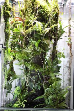 Frog Paludarium with Water after 9 months, upper Branches coated with Hygrolon Gecko Terrarium, Aquarium Terrarium, Reptile Terrarium, Terrarium Plants, Planted Aquarium, Reptile Habitat, Reptile Room, Vivarium, Reptiles