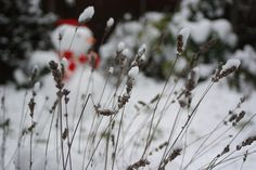 Boxing Day Traditions, Boxing Day Food, British Traditions, Public Holidays, December 26, Flakes, Frost, Ice, Snow