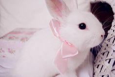 Made Of Mice : Photo
