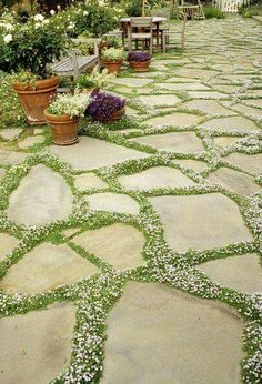 Plants you can use in between pavers include Creeping Thyme, Blue Star Creeper, Irish Moss, Mini Mondo Grass, Dwarf Lobelia, Dichondra and Sedums.