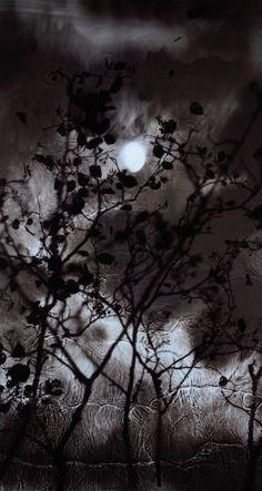 Susan  Derges, Gibbous Moon Alder, 2009