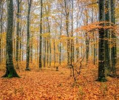 """""""Autumn Forest"""" - Sandefjord, Norway"""
