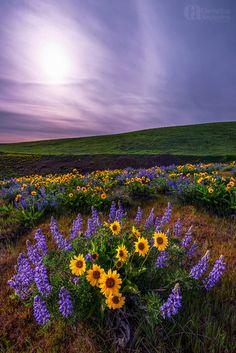 Dalles Mt. Ranch, Oregon, USA
