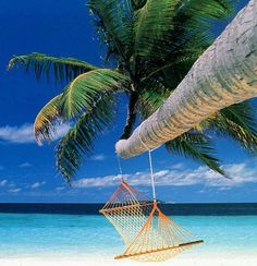 I want to be in that hammock attached to a palm tree, leaning over the beautiful Carribbean..........