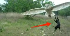I Thought This Cat Was Going To Be Owl Food - But Watch What Happens Next