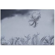 Trademark Fine Art Frost Fairy on a Window Canvas Art by Kurt Shaffer, Size: 22 x 32, Multicolor