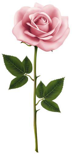 Pink Rose PNG Clip Art Image