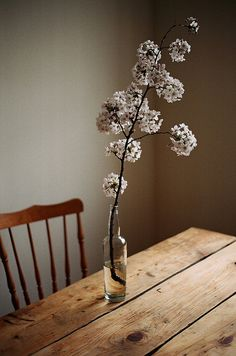 Like to cut branches in the spring and let the boquet bloom. Deco Floral, Arte Floral, Wabi Sabi, Ikebana, Beautiful Flowers, White Flowers, Wood Flowers, Glass Flowers, Table Flowers