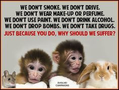 Testing Cosmetics On Animals | ... Animal Testing and prevent your cosmetics being tested on animals