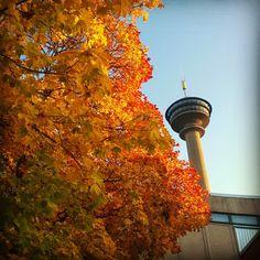 Näsinneula ja syksyn väriloistoa. Näsinneula observation tower. #sarkanniemi # tampere visit: http://www.sarkanniemi.fi