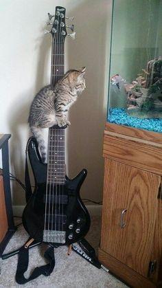 Que vous avez une belle guitare, dit le petit poisson.  C'est pour mieux vous admirer lui répondit chat Lustucru......