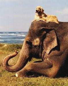 Dog over Elephant