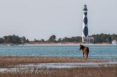 Cape Lookout  - HGPhotos