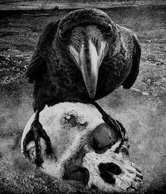 Ravens: #Raven with a skull.