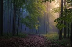 Forest energies by Janek Sedlar on 500px