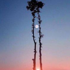 Incrível! O Sol e a Lua em uma mesma foto.