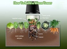 How To Build a Worm Tower  A Worm Tower is basically a length of pipe buried halfway in the ground with holes drilled in the buried part for worms to get in and out. Food scraps are added directly to the tower instead of into your composting bin, and