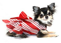 Candy Cane Dog Dress by KO Couture!