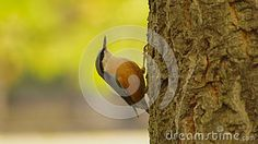 Bird on the tree in the park