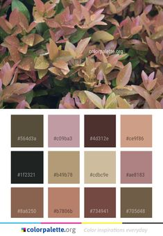 Plant Autumn Color Palette Leaf Plant Autumn Color PaletteLeaf Plant Autumn Color Palette Leaf Plant Autumn Color Palette 59 Trendy Home Color Schemes Interior Warm Flora Tones for the fall season Hex Color Palette, Vintage Colour Palette, Earthy Color Palette, Pastel Colour Palette, Vintage Colors, Colour Schemes, Scheme Color, Rustic Color Palettes, Rustic Colors