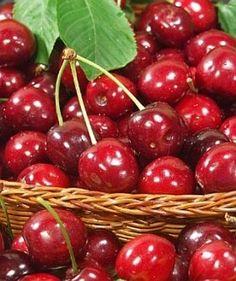 yummy Cherry Tree, Cherry On Top, Fresco, Bing Cherries, Sweet Cherries, Cherries Jubilee, Verduras E Legumes, Cherry Hill Park, Tous Les Fruits