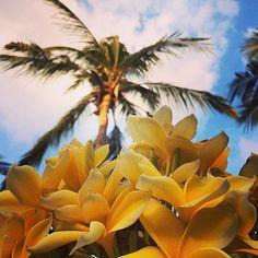Gorgeous flowers at Trawangan Oasis.. #upsticksandgo #travel #travelgram #travelphotos #flowers #travellingtheworld #giliT #gilitrawangan #lombok #indonesia