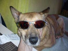 Zdjęcie - Zdjęcia Google Sunglasses, Google, Shades, Wayfarer Sunglasses, Eyewear, Glasses
