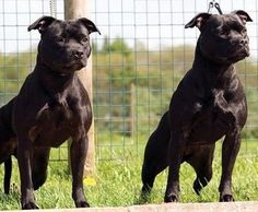 Rare Dog Breeds Uk