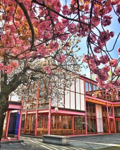 more school in spring school spring flowers trees architecture beauty