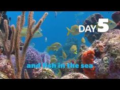 The Creation Song - Kids Learn the Days of Creation In This Short Song - The Sciencesaurs - YouTube