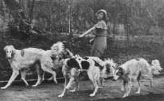 Vintage 1930's magazine photo #dogs #animal #borzoi
