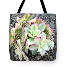 Rock, Paper, Succulent Unique Tote Bag This will certainly turn heads Found on pixels.com http://pixels.com/products/rock-paper-succulent-russell-keating-tote-bag.html