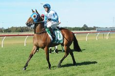 Fast Nitz Hoping To Make Up For No Luck Last Start (Nowra Sunday)