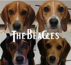LOL! <3 beagles!