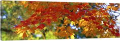 Canvas with Floating Frame entitled Fall Foliage Guilford Baltimore City MD, Gold