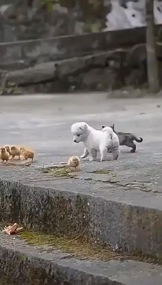 Cute Little Animals, Cute Funny Animals, Funny Dogs, Cute Cats, Funny Birds, Very Cute Puppies, Puppy Play, Cute Animal Videos, Tier Fotos